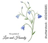 Realistic Bluebell  The Symbol...
