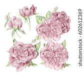 watercolor pink peonies set | Shutterstock . vector #602612369