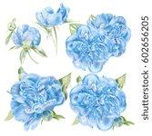 watercolor blue peonies set   Shutterstock . vector #602656205