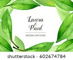 watercolor bay leaves... | Shutterstock . vector #602674784