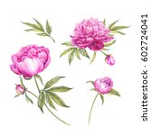 set of watercolor pink peonies. ... | Shutterstock . vector #602724041
