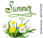 lettering summer chamomile herb ... | Shutterstock .eps vector #602745149