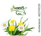 lettering summer chamomile herb ... | Shutterstock .eps vector #602745155
