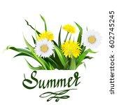 lettering summer chamomile herb ... | Shutterstock .eps vector #602745245