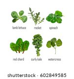 green salad  leaves collection... | Shutterstock .eps vector #602849585