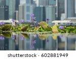 nature in a modern metropolis | Shutterstock . vector #602881949