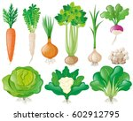 different types of vegetables... | Shutterstock .eps vector #602912795