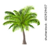 illustration realistic palm... | Shutterstock .eps vector #602929457