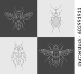 set of four insects design... | Shutterstock .eps vector #602991911