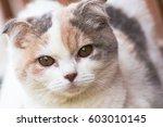 the cat relaxing on floor brown ... | Shutterstock . vector #603010145