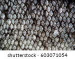 Fish Skin Scales Detailed Macr...