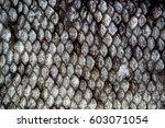 Fish Skin Scales Detailed Macr...