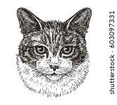 drawn portrait of cute cat....   Shutterstock .eps vector #603097331