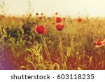 beautiful poppy flowers on... | Shutterstock . vector #603118235