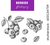 blueberries hand drawn vector... | Shutterstock .eps vector #603134759