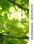 Light Through The Green Leaves