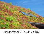 Roof With Sedum