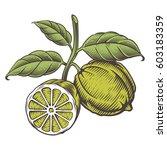 vintage bergamot color... | Shutterstock .eps vector #603183359