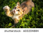 Stock photo adorable cat is playing in the yard 603204884