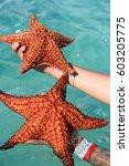 Starfish In A Hand  Caribbean...