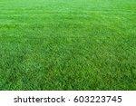 green lawn background | Shutterstock . vector #603223745