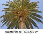 tropical palm closeup  in... | Shutterstock . vector #60323719
