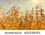 Oat Rural Field Warm Sunny...