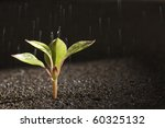 A Young Green Plant With Water...