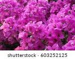 Beautiful Purple Spring Flower...