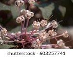 magenta flower  winter...