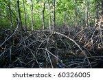 Mangrove  Thailand