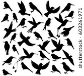 Vector Set Of Birds Silhouette...