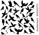 vector set of birds silhouettes ... | Shutterstock .eps vector #603261971