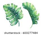 set of big tropical green leaf... | Shutterstock . vector #603277484
