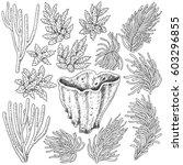 hand drawn underwater natural... | Shutterstock .eps vector #603296855