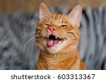 Stock photo funny ginger cat 603313367