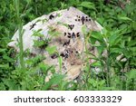 Dragonflies On Rock