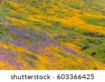 california poppies and...   Shutterstock . vector #603366425