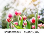 flowers in the beautiful flower ... | Shutterstock . vector #603540107