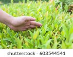 the hand image is touching the... | Shutterstock . vector #603544541