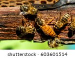 Small photo of The queen bee swarm - selective focus