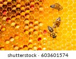 Stock photo closeup of bees on honeycomb in apiary selective focus copy space 603601574