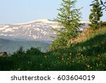 Small photo of Spring in the Altai Mountains
