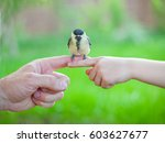 Small photo of little yellow and black bird on finger, tit in the hand, tenderness, greenery blured spring summer background, transfer experience from parents to children, game pleasure conversation chatter twitter