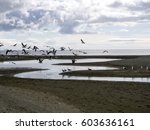 bay with seagulls   punta... | Shutterstock . vector #603636161