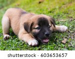 Stock photo puppy sleep on the grass with copy space on the right 603653657
