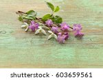 pink flowers with green leaves... | Shutterstock . vector #603659561