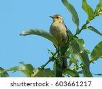 a bird in the wild  | Shutterstock . vector #603661217