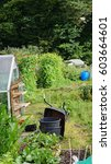 Small photo of An English allotment in summer