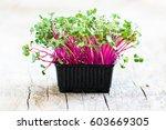 fresh radish cress on wooden... | Shutterstock . vector #603669305